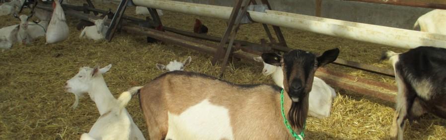Kirchenberg Farm, Fleetwood, Berks County